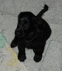 0246_puppy